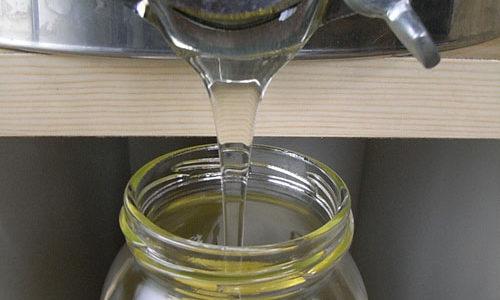 初夏採れ蜜の販売開始です
