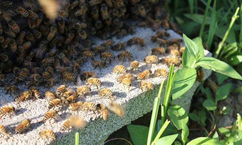 初夏採れ蜜 発売開始