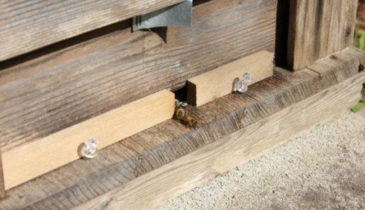 山の蜂場を見回り ヤマイモ全部イノシシに食べられてしまった!!