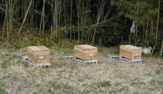 【西洋ミツバチの飼育方法】ミツバチを購入