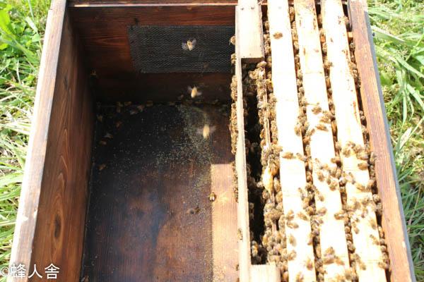 西洋ミツバチ飼育方法