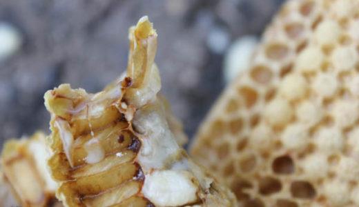 【西洋ミツバチの飼育方法】 採蜜前のダニ駆除