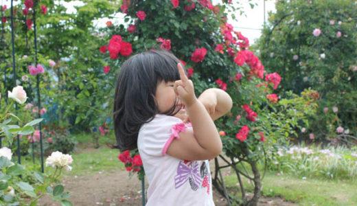 運動会、鴨川市らん花園にバラを鑑賞に行きました