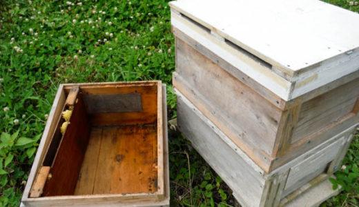 【西洋ミツバチの飼育方法】ミツバチの合同方法