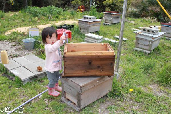 ミツバチ巣箱の清掃
