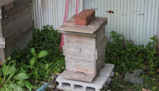 【日本ミツバチ】2016年分蜂3回目 分蜂群を捕獲して重箱へ