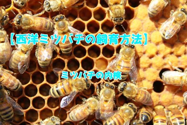 【西洋ミツバチの飼育方法】ミツバチの内検