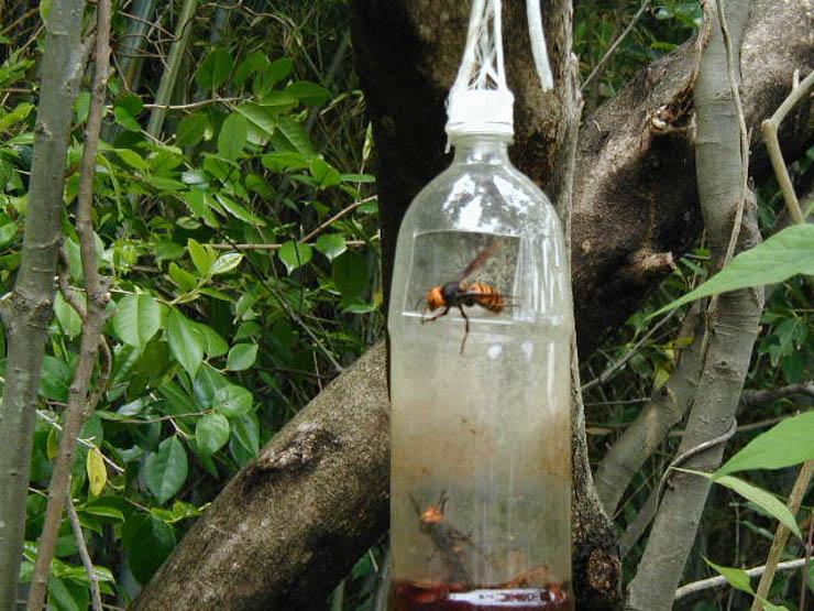 2016年スズメバチ捕獲器外しました