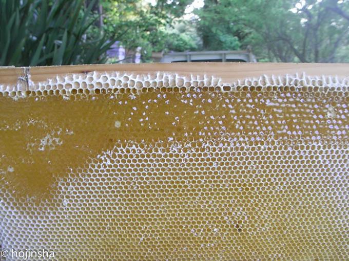2016年 春の蜂蜜、間もなく販売開始です
