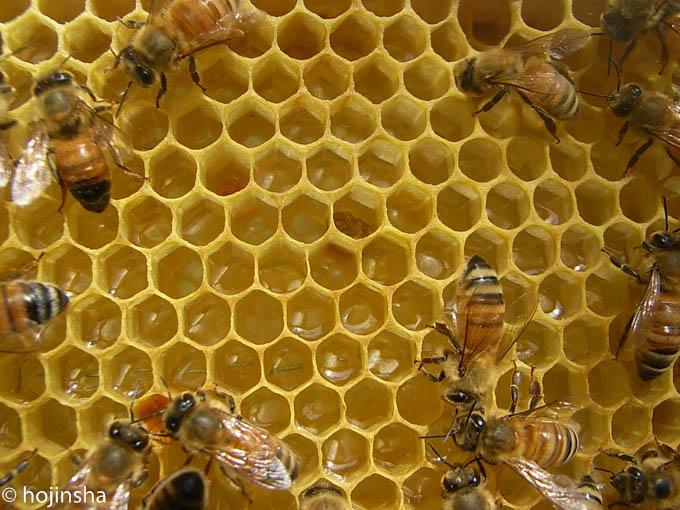 初夏採れ蜜 販売開始です