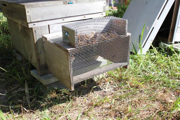2017年秋の養蜂作業 スズメバチ捕獲器を取り除く、巣枠の整理