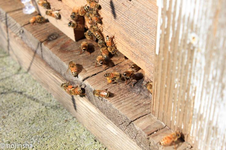 2017年ミツバチの建勢は遅れ気味