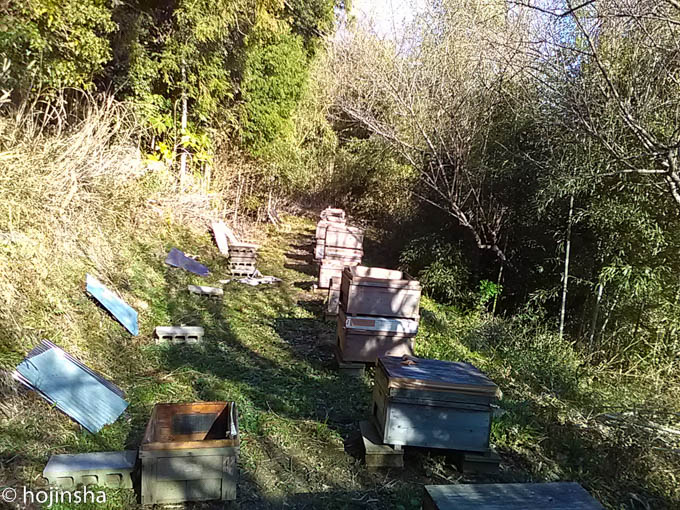【養蜂作業】冬囲いを解く作業が続きます 今年初のミツバチの一刺し