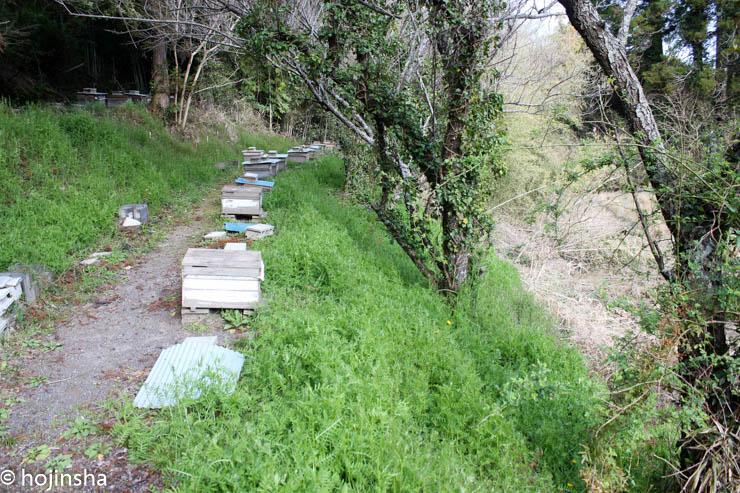 2017年ミツバチ初内検 今年は内検開始がちょっと遅い