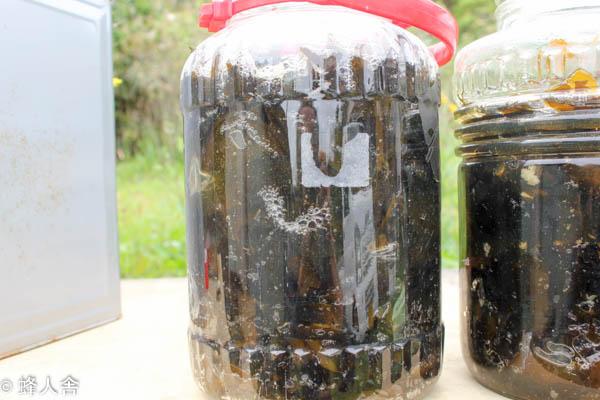 ミツバチの免疫力アップ ミツバチに与える海藻抽出物を仕込みました