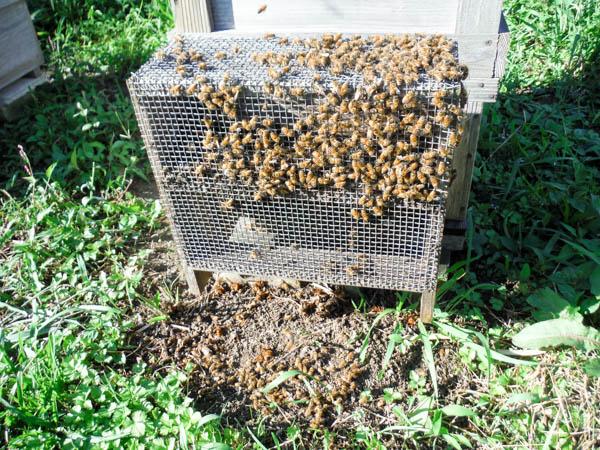 2017年オオスズメバチの初襲撃は、10月3日だった