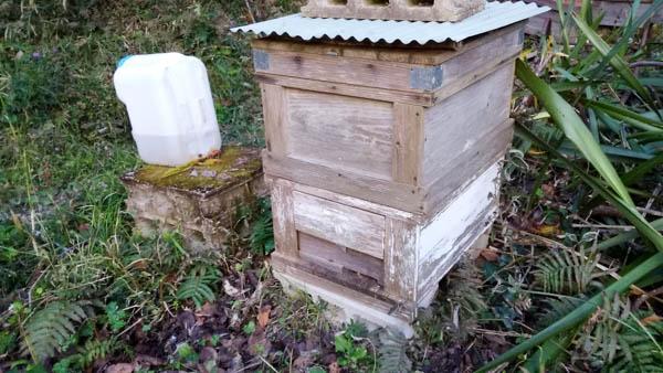 2017年日本ミツバチ 越冬前の入居