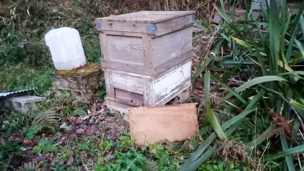日本ミツバチ巣箱に西洋ミツバチが群がる