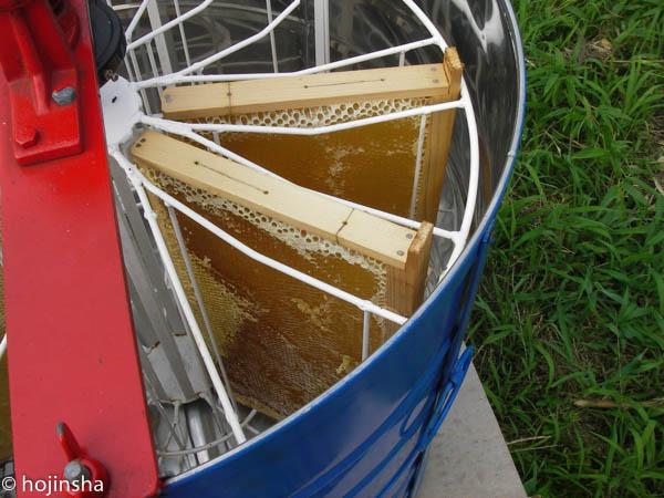 【ミツバチの飼育方法】採蜜方法
