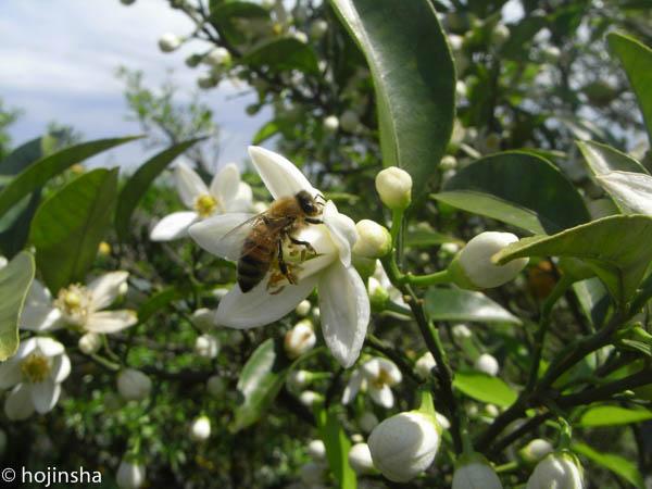 春採れ蜜 販売開始します