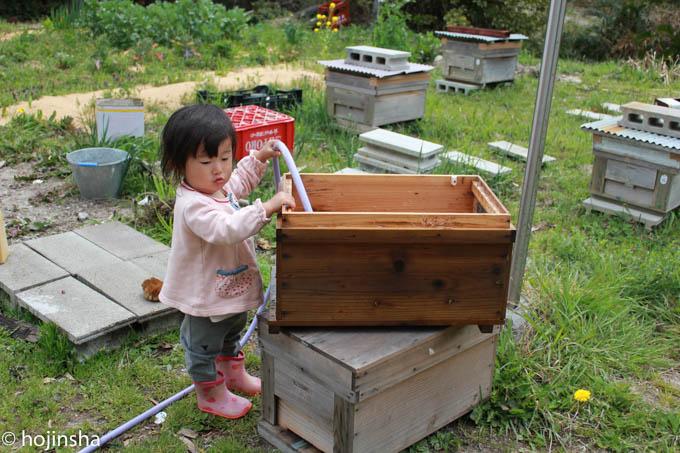 【西洋ミツバチの飼育方法】巣箱の清掃方法