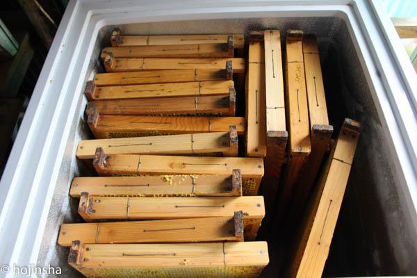 【西洋ミツバチの飼育方法】巣脾の保存方法