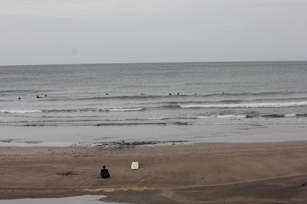 海も大分空いてきました、ノイバラ、ニセアカシアが開花