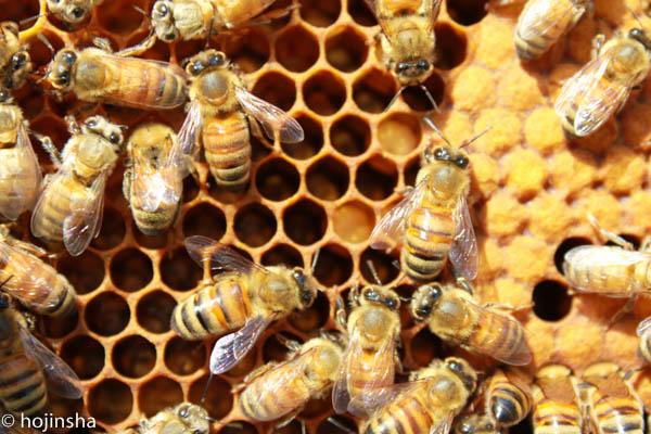 【養蜂作業】越冬に向けての作業 巣枠の整理