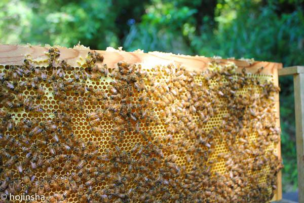 猛暑のなか、ミツバチヘギイタダニの駆除作業