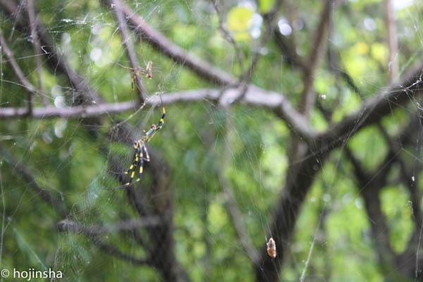 落葉樹の下でミツバチを飼育するデメリット、仕事中にトレーニング