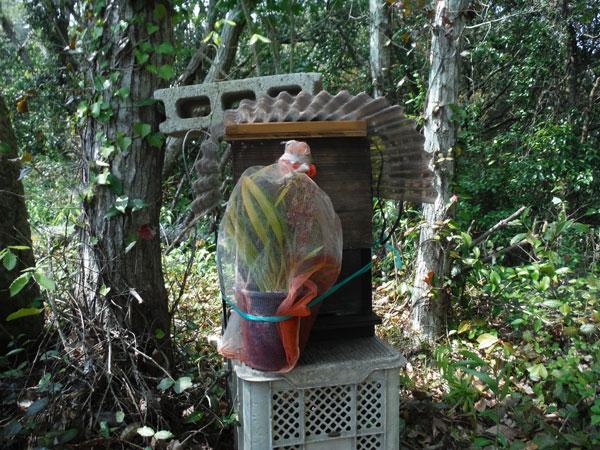日本ミツバチの待ち箱を山に設置してきました
