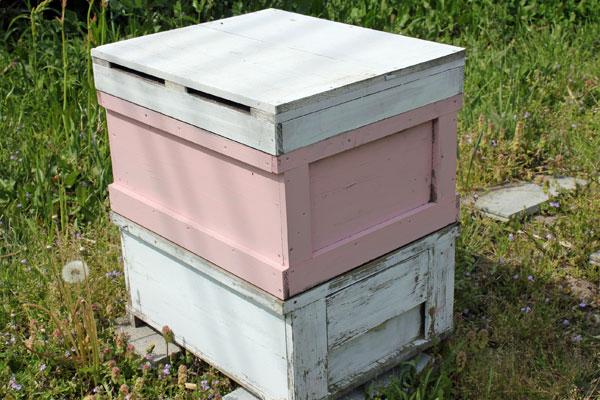 【ミツバチの飼育方法】春の建勢作業 継箱をする