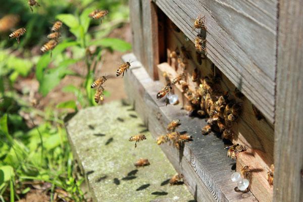 2018年養蜂スタート 給餌をしました