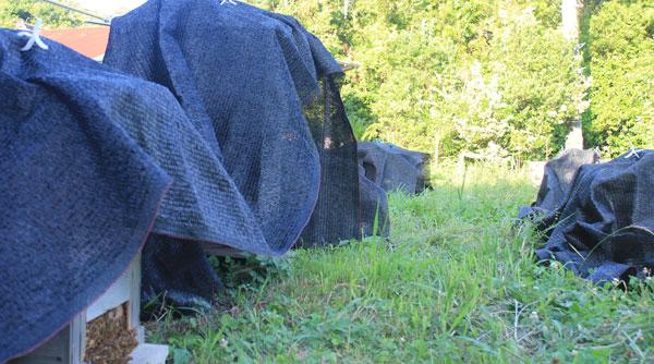 【西洋ミツバチの飼育方法】夏の管理