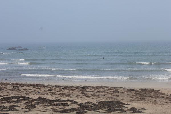 本日採蜜、波はサイズダウン