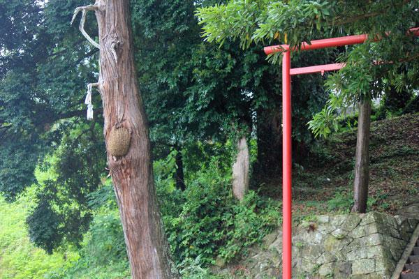 神社の西洋ミツバチ群を捕獲