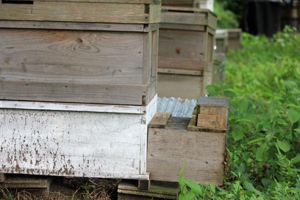 2014年 スズメバチ捕獲器を設置しました
