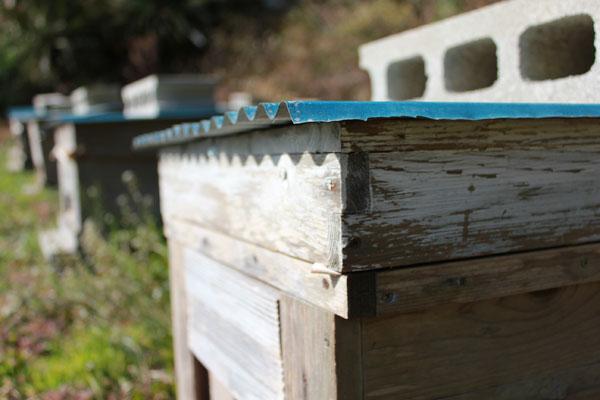 蜂場の見回り、節分