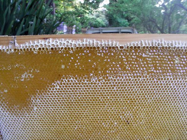 初夏の里山はちみつを採蜜中