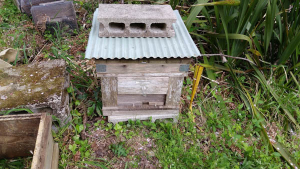 日本ミツバチの待ち箱