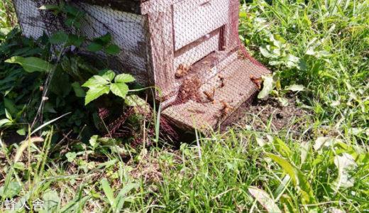 スズメバチ対策 魚ネットの結論