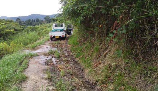 蜂場へ続く山道を整備する、ヒグラシ初鳴き