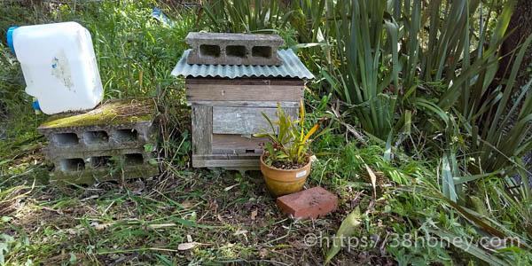 日本ミツバチ、キンリョウヘン